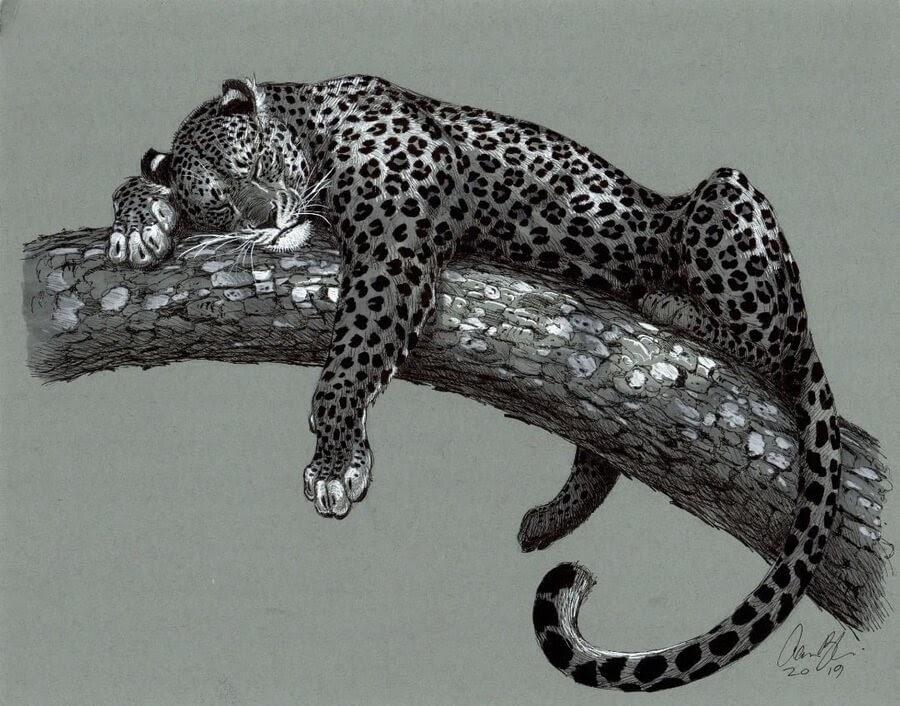 02-Leopard-Sleeping-Aaron-Blaise-www-designstack-co