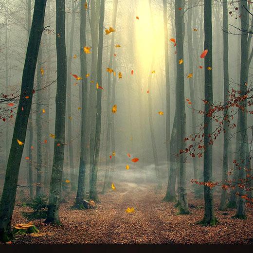 Autumn Forest 02 Wallpaper Engine