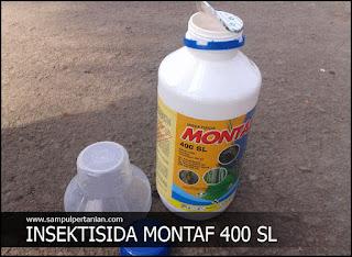 Insektisida MONTAF 400 SL bahan aktif Bisultap (DIMEHIPO)