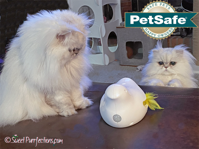 Two silver Persian cats playing with the PetSafe Peek-a-Bird cat toy