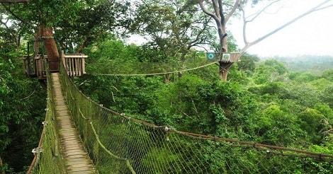 Wisata Alam Bukit Bangkirai, Kalimantan Timur