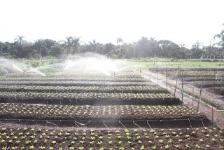 Educação da Ilha investe na formação de uma geração que ama hortaliças