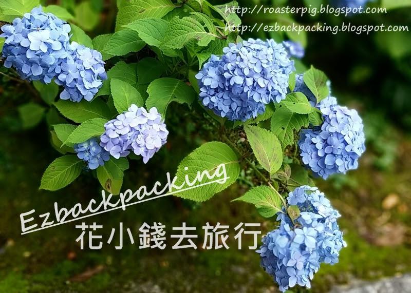 日本紫陽花/繡球花花期統計-http://roasterpig.blogspot.com