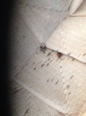 bed bugs statesboro, bed bugs savannah, bed bugs hilton head, bed bugs athens, bed bugs atlanta,
