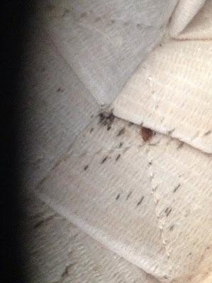 bed bugs statesboro, bed bugs savannah, bed bugs hilton head, bed bugs athens, bed bugs atlanta,