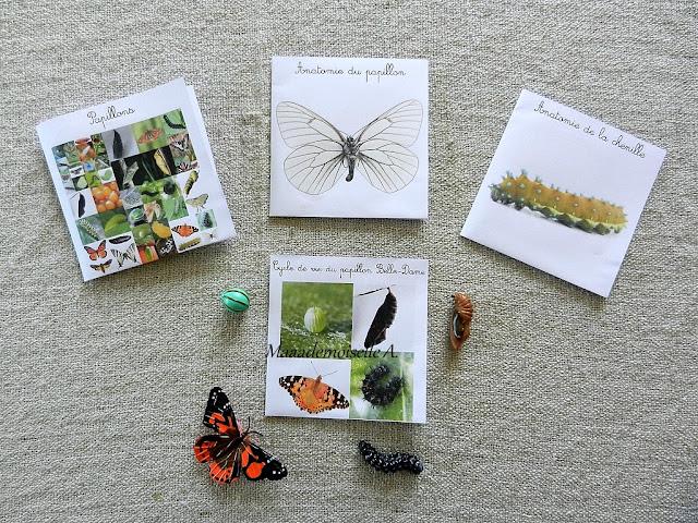|| Nos activités sur les papillons : Cartes de nomenclature et figurine cycle de vie et anatomie