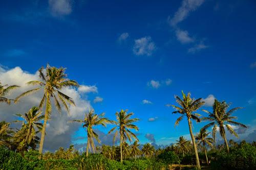 Một bầu trời xanh