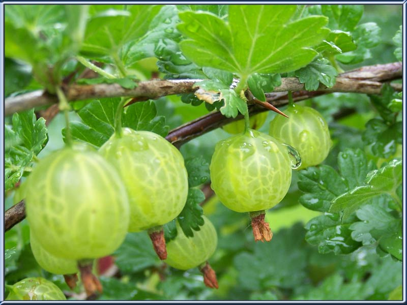 fruits name hindi to english pdf