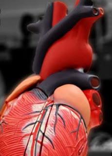 ارتفاع نسبة الدّهون في الجسم واختلال تمثيل الدهون الغذائي الدهون الثلاثية والكولسترول طبيب نت