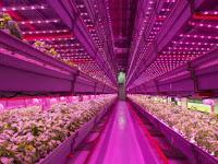 Tips Maksimalkan Kinerja Lampu LED Pada Kebun Tanaman Indoor