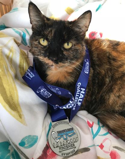 tortoiseshell cat wearing race medal around neck