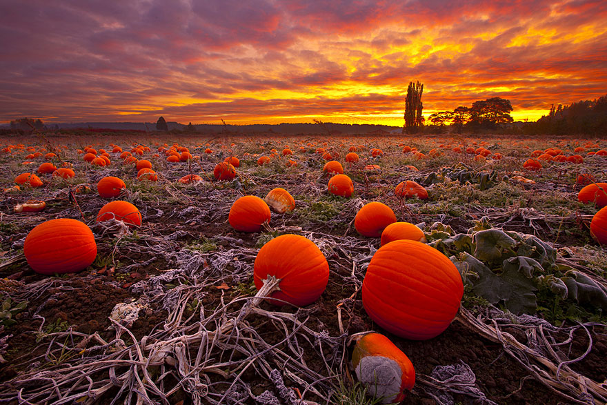 autumn-photography-10