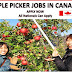 Apple farm worker wanted Canada