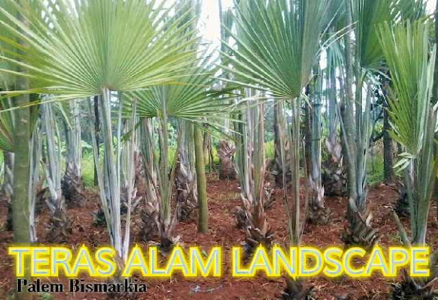 tukang pohon palm washington