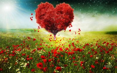 Un Coeur de la Saint Valentin Coquelicots - Fond d'Écran en Quad HD 1440p