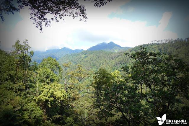 Panorama Rumah Pohon Batang