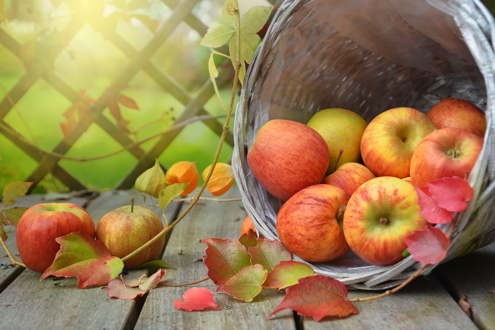 أفضل المناظر الطبيعيه للتفاح