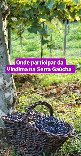 Onde participar da Vindima na Serra Gaúcha
