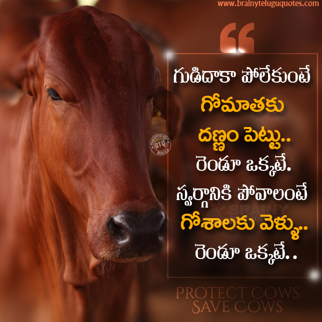 gorakshana quotes in telugu, important of cows in telugu, best words to life in telugu, greatness of cows in our life quotes in telugu