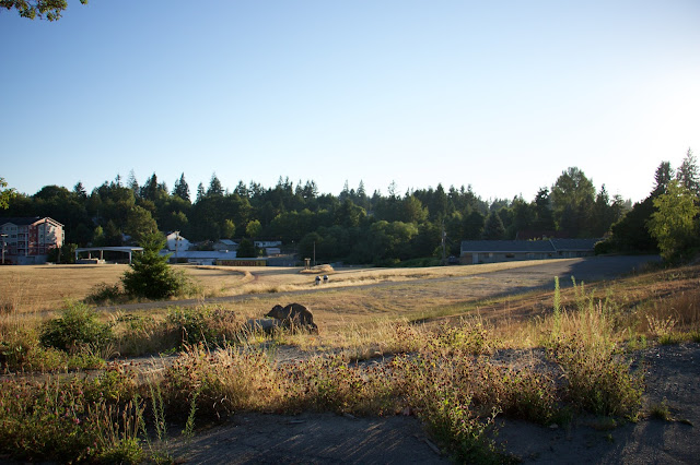 Landscape view of Aldercrest Annex fields