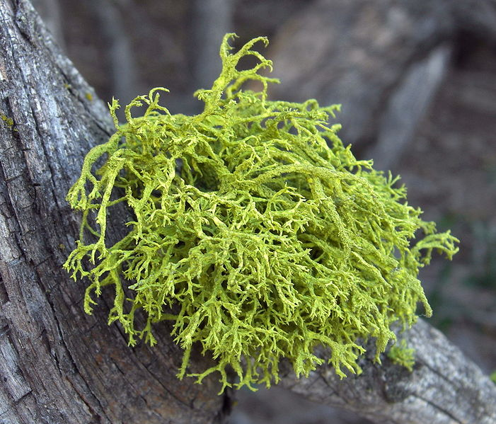 The Science Notebook : Lichens: A Burst Of Color On A Dark Day