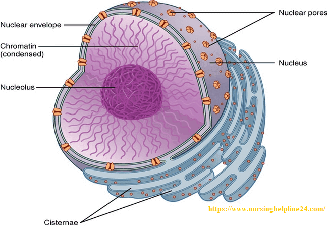 Structure of nucleus