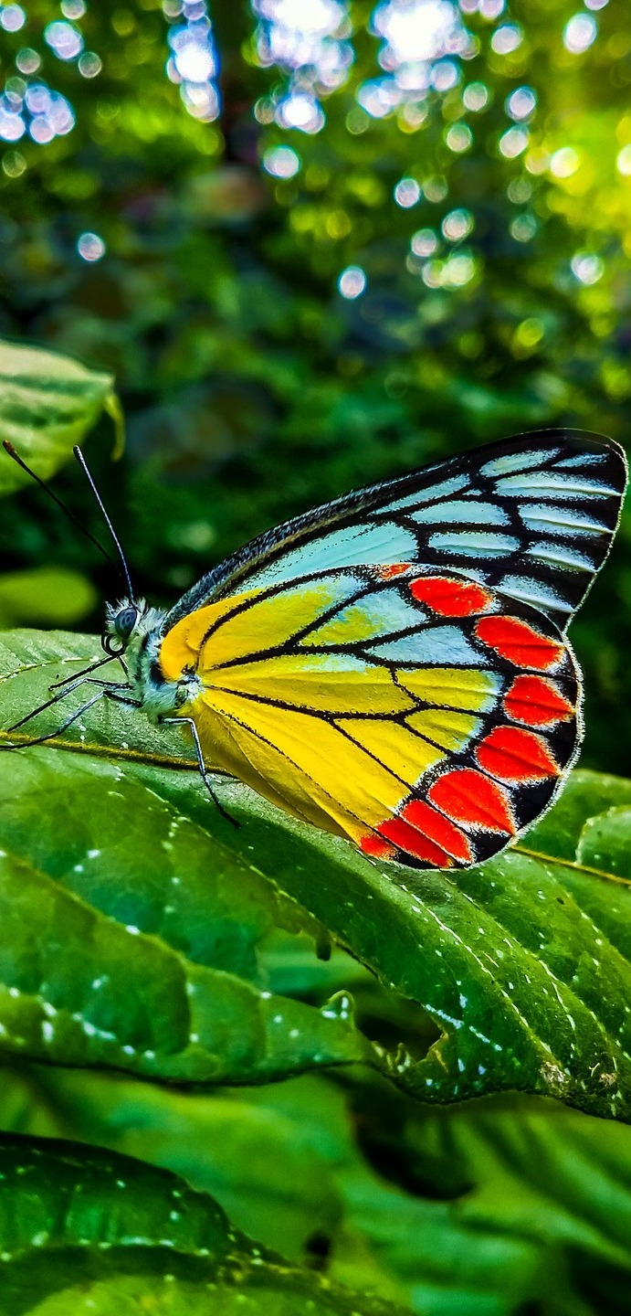 Colorful beautiful butterfly.