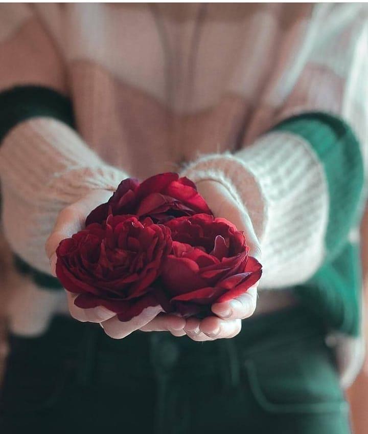 Rose in Girl Hand DP