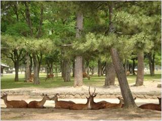 สวนสาธารณะนารา (Nara Park)