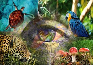 Invita México a la Semana de la Diversidad Biológica 2019