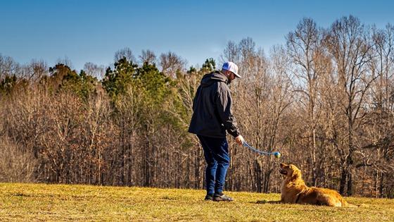 Do It Yourself Dog Training Program Review