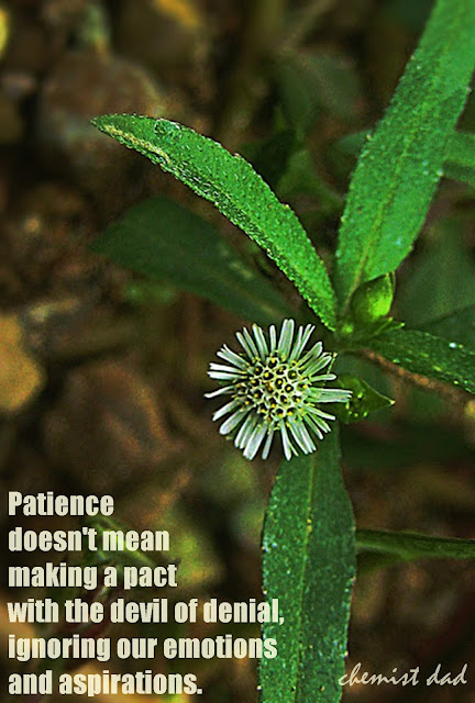 flower power tuesday, Flower, Inspirational Quotes, quotes about flowers, canon ixus 70, patience,