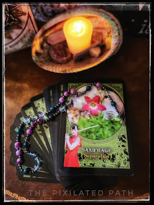 Saxifrage Card from the Flower Magic Oracle by Rachel Patterson