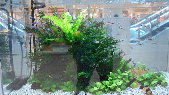 水槽の中の熱帯魚