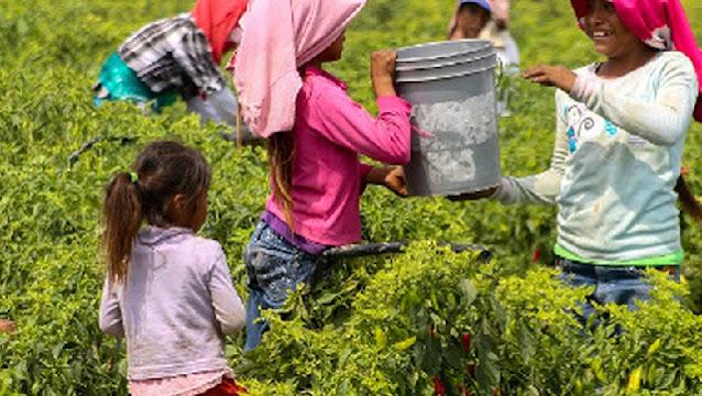 Aprueban dictamen para prevenir, atender y sancionar el trabajo forzoso, la esclavitud y las peores formas de trabajo infantil