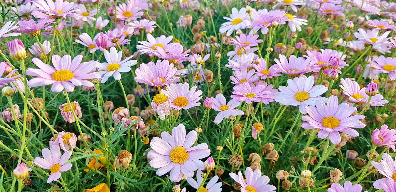 as eternas flores