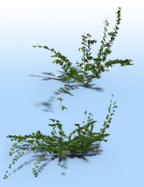 Bramble, Blackberry and Briar Plants for Daz Studio and Iray