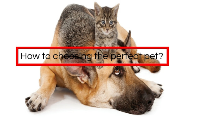 How to choosing the perfect pet?