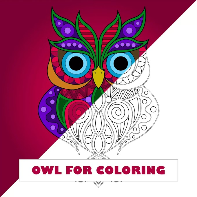 Owl for Coloring