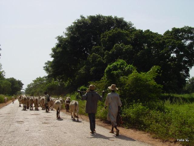 szenegál nő találkozása kamerun round nő találkozása