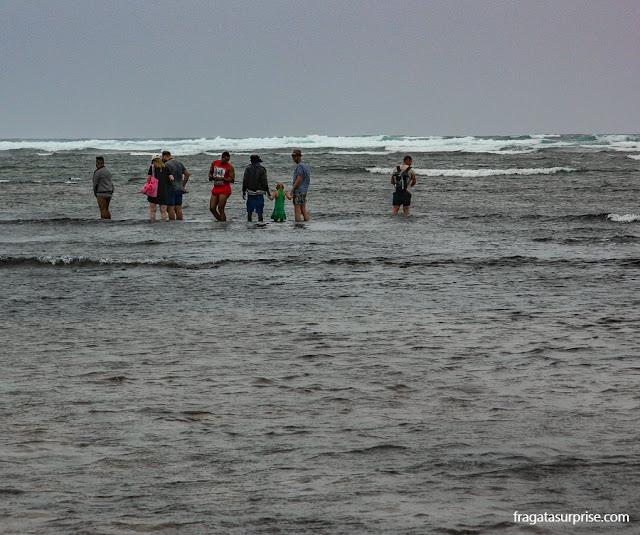 Observação de tubarões na Ilha do Sal, Cabo Verde