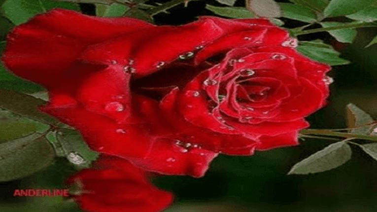 Puisi Rindu Terlahir Dari Cinta Abadi