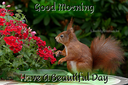70+ Good Morning Wishes... Have A Nice Day Images...