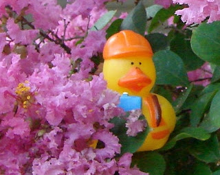Bob in the crepe myrtle