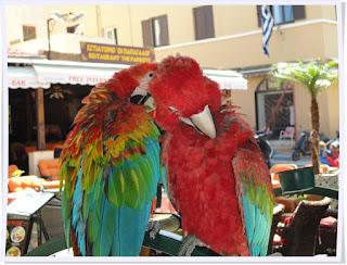 Rhodes, perroquets,Grèce, colosse de Rhodes, chevaliers, unesco, mer égée