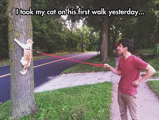 Funny Cat First Walk Joke Picture