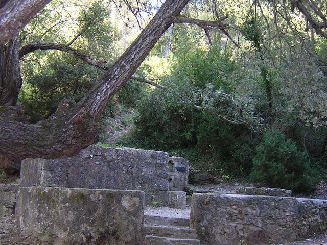 Esguard de Dona - Font Cuitora, coneguda per les seves qualitats diürètiques i perquè la seva aigua és molt adient per coure llegums - Foto V. Roig CC license - La Llacuna -Anoia - Els albers que envolten la font van ser declarats d'interès comarcal l'any 1995