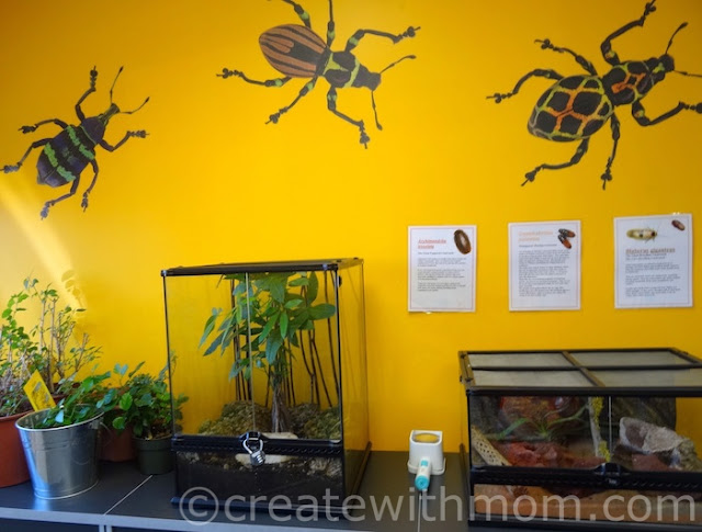 Entomica Insectarium in Sault Ste. Marie
