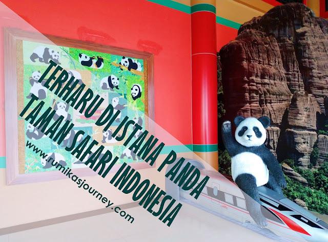 terharu-di-istana-panda-taman-safari-indonesia-bogor