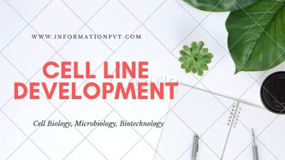 Cell Line Development